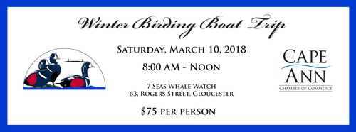 Winter Birding Boat Trip - Gloucester MA