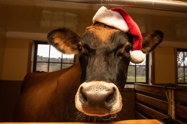 Billings Farm Celebrate Christmas @ the Farm in December