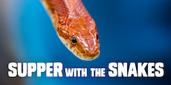 Virtual: Supper with the Snakes with the Peggy Notebaert Nature Museum