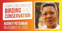 Virtual Presentation: Audrey Peterman and the Doctor Bird with the Peggy Notebaert Nature Museum