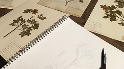 Virtual Workshop: Botanical Illustration with the Peggy Notebaert Nature Museum