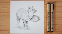 Virtual Workshop: Mammal Illustration with Peggy Notebaert Nature Museum
