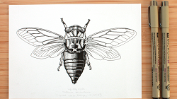 Virtual Workshop: Insect Illustration with Peggy Notebaert Nature Museum