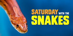 Saturday with the Snakes at the Peggy Notebaert Nature Museum