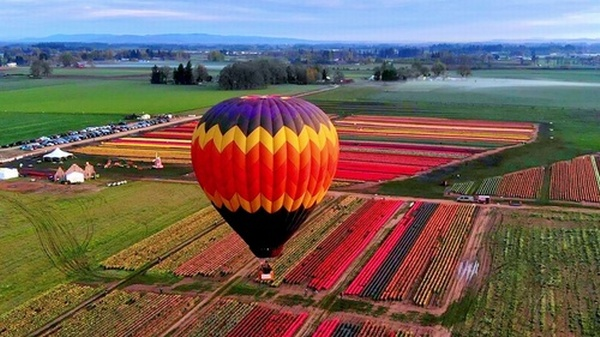 Tulip Festival 2020 Oregon.Wooden Shoe Tulip Festival Mar 20 2020 Oregon Festivals