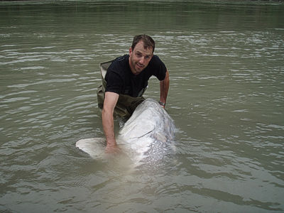 Fraser Canyon Monster Sturgeon