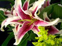 Fresh-cut Flowers
