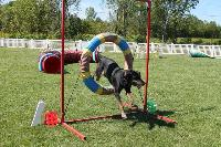 CHK offers agility classes and yard rentals.