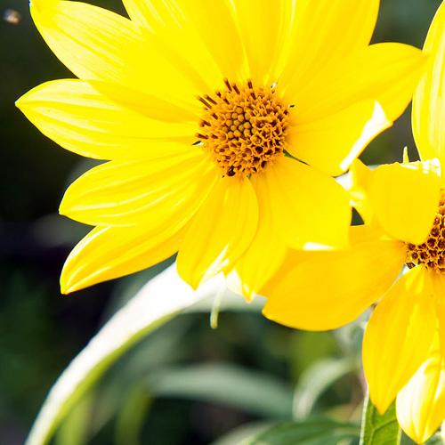 Gallery Image CT_dickinson_late%20summer-097_crop.jpg