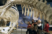 More than 40,000 students visit the Whaling Museum each year