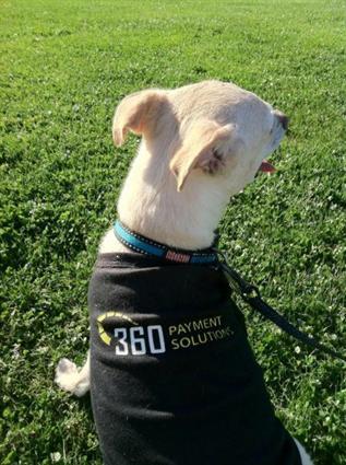 Bronx- office dog #1