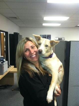 Roxi- office dog #2