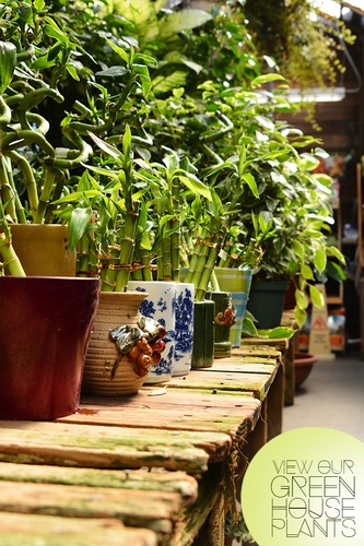 Gallery Image indoor-plants.jpg