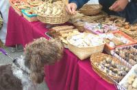 Pooch Shops the AC Faire