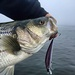 Codfather Charters/Guide Service