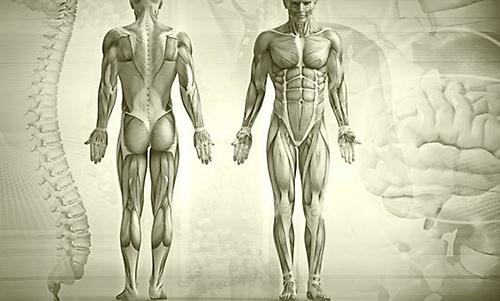 Gallery Image Newburyport-Chiropractor-Body.jpg