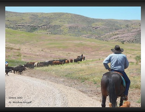 Gallery Image Cattle%20Drive.jpg