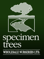 Specimen Trees Wholesale Nurseries