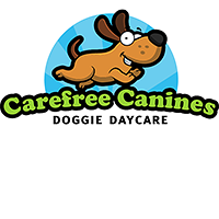 Carefree Canines Doggie Daycare