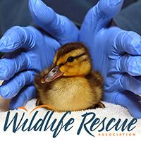 Wildlife Rescue Association of BC