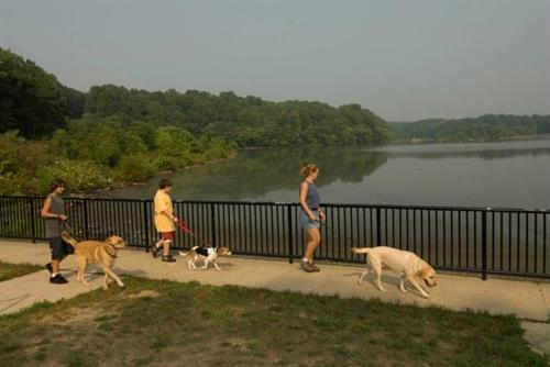 Gallery Image Dogs%20and%20Lake.jpg
