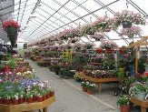 Thousands of Annuals and Perennials