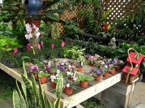 Gallery Image flowerplace_gallery1.jpg