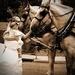 L-M Horse & Carriage