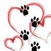 Four Paws Pet Service