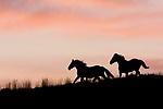 Green River Wild Horse Tours