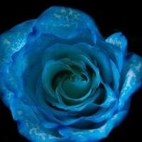 Blue Rose Boutique Photography