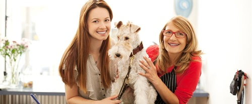 Dog Grooming Leduc
