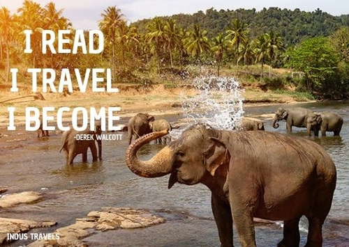 Gallery Image elephant.jpg