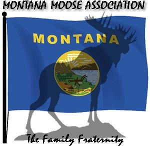 Gallery Image moose.jpg