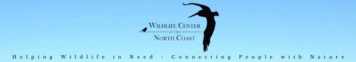 Gallery Image WCNC%20logo.png