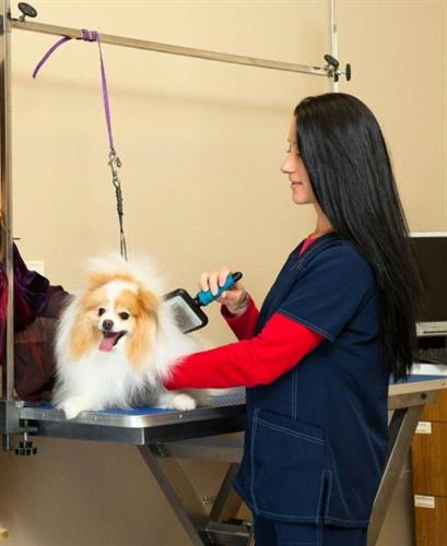 All Pets Animal Hospital and 24 Hour Emergency Care | 24221