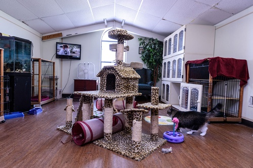 Gallery Image pic-cathouse.jpg