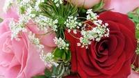 Forget-Me-Not Florist Inc