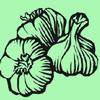 Wallowa Mountain Garlic