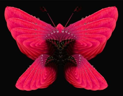 Gallery Image SBDCDebbie%20Lind%20Butterfly%20Blooms.jpg