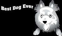 MastersBestDogEver, Dog Trainer