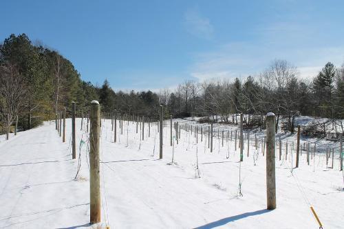 Snow January 2014