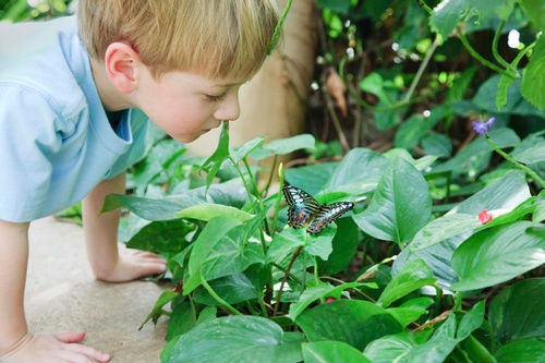 Gallery Image butterfly-boy%20small.jpg