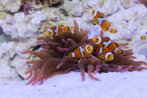 Gallery Image Clownfish%20SSC%20Exhibits.jpg