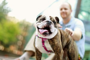 Gallery Image purina4.PNG