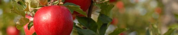 Gallery Image banner-apples-2000x400.jpg
