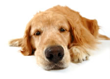 Gallery Image contact-us-dog.jpg