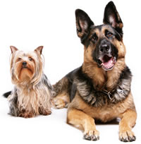 Gallery Image two-dogs.jpg