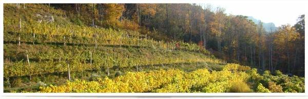 Gallery Image wines-header-images-nc-winery-vineyard-tasting.jpg