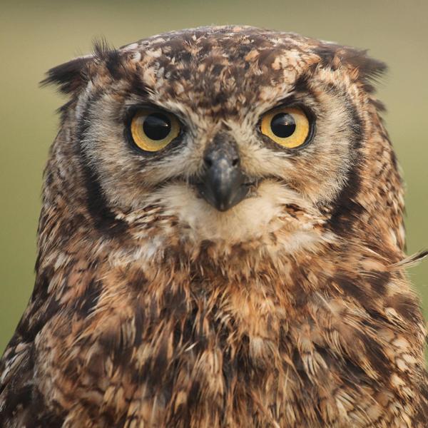 Gallery Image owl-1.jpg